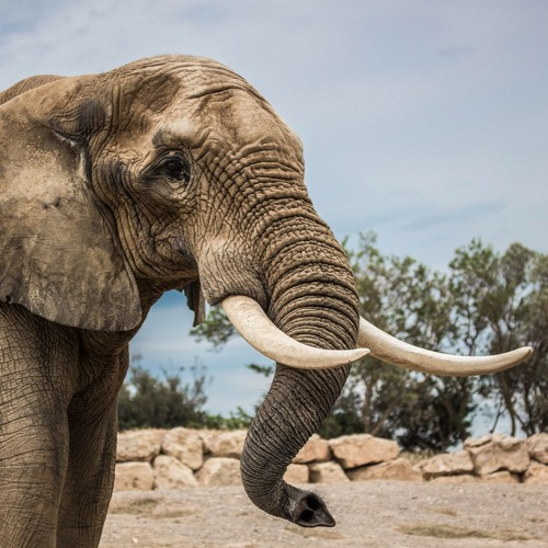 The Week That Was at Global Voices: Elephant in the Room