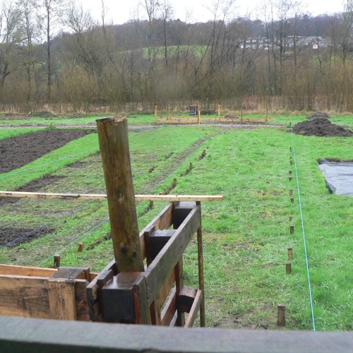 The Wildlife Friendly Gardeners Allotment, Lancashire 17/2/16