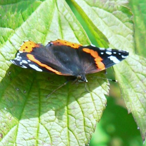 The Chorlton Community Wildlife and Edible Garden in Lancashire - 7/7/15