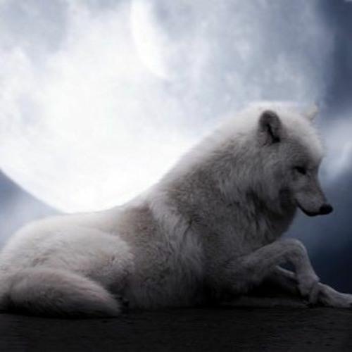 White night / Biela noc   ( J.Maxián + M.Huba/ J. Maxian )