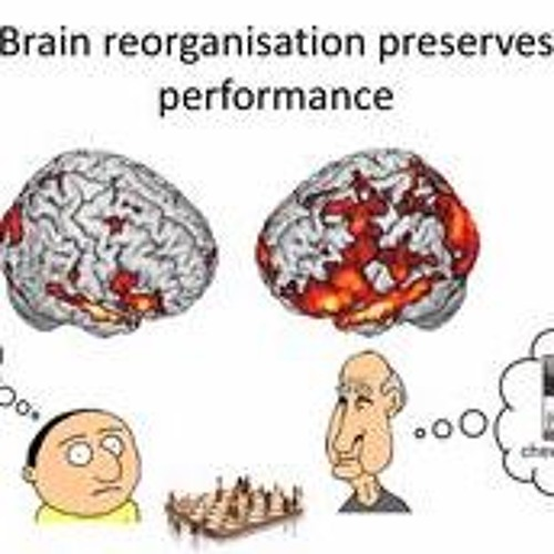 The Resilient Brain: Cognition and Ageing