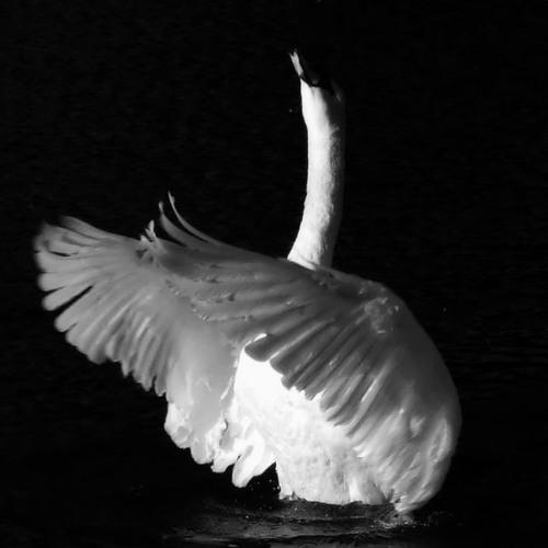 Distanz - Swan Song