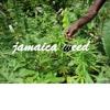 amc mix beat jamaica weed 2016 instrumental