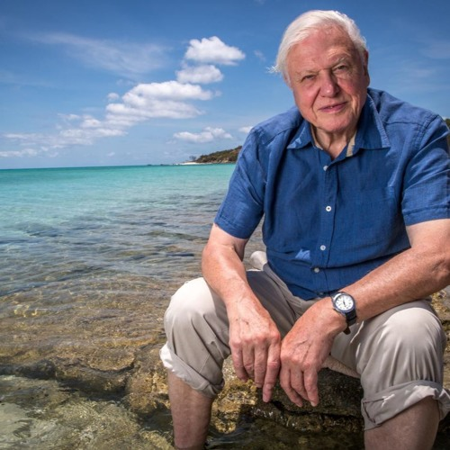 Anthony Geffen, Producer of Attenborough's Great Barrier Reef