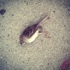 """dead birds"" by elliot mclaughlin"
