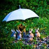 RABBITS IN THE RAIN