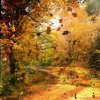 One Hour of Autumn Forest Sounds for Meditation, Sleep & Relaxation
