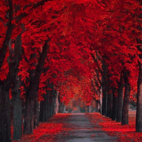 RedStreet