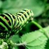 The Caterpillar: What Nourishes You?