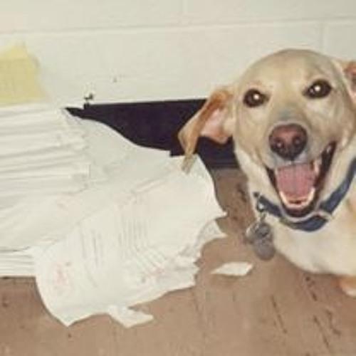 do dogs really eat homework