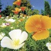 It's Wildflower Season!: The best places to look in and around Silicon Valley