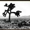 U2 - Bullet The Blue Sky Solo (JT version)