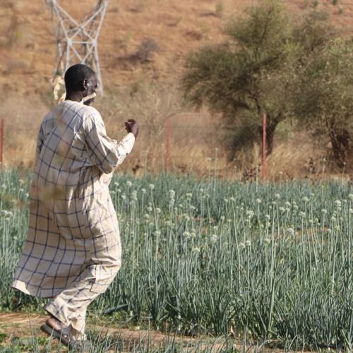 Déclaration sur les droits des paysans et paysannes