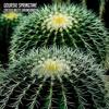 Gourski - Springtime [Cactus Meets Drum&Bass] mp3
