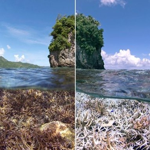 Why Climate Change is Wreaking Havoc on The World's Coral Reefs