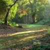 One Hour of Woodland Bridleway Sounds for Meditation, Sleep & Relaxation