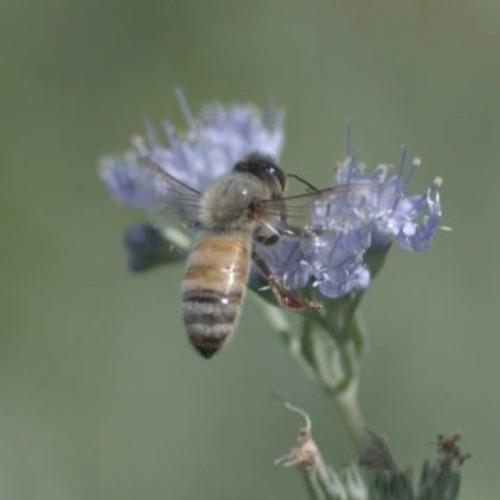Farmers and pollinator habitats