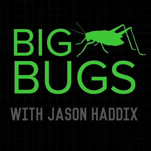 Big Bugs Podcast | Episode 1: Auto Bugs - Critical Vulns in Cars