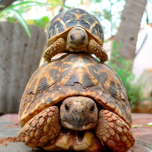elegy for the giant tortoises