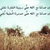 د.أحمد عبد المنعم