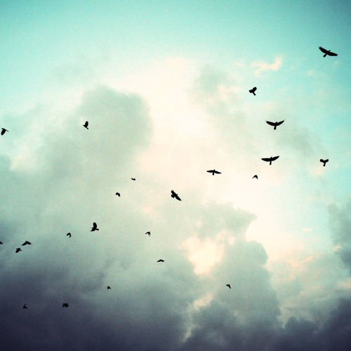 We'd Be Birds