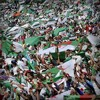 Algerie VS Korea Par Hafid Derradji - YouTube