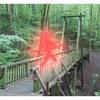 Broen i skoven