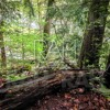 Mohican State Park Hike From Covered Bridge To Big Lyons Falls And Back 5 11 16 Mp3 Excerpt
