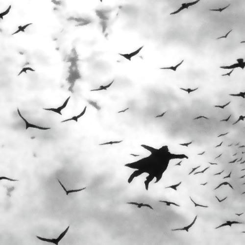 Birds, Reincarnate - for String Quartet