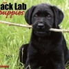 Just Black Lab Puppies 2012 Calendar (Just (Willow Creek))  download pdf.mp3