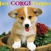 Corgi Puppies 2012 Calendar (Just (Willow Creek))  download pdf.mp3