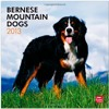 Bernese Mountain Dogs 2013 Square 12X12 Wall (Multilingual Edition)  download pdf