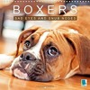 Boxers Sad Eyes and Snub Noses 2016: Boxers - Pets with Character (Calvendo Animals)  download pdf