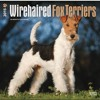 Wirehaired Fox Terriers 2015 Square 12x12 (Multilingual Edition)  download pdf
