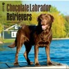 Labrador Retrievers, Chocolate 2015 Square 12x12 (Multilingual Edition)  download pdf