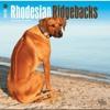 Rhodesian Ridgebacks 2015 Square 12x12 (Multilingual Edition)  download pdf