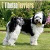 Tibetan Terriers 2015 Square 12x12 (Multilingual Edition)  download pdf