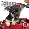 Chihuahua Puppies 2015 Mini 7x7  download pdf