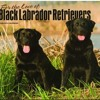 Labrador Retrievers, Black For the Love of 2015 Deluxe (Multilingual Edition)  download pdf
