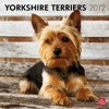 Yorkshire Terriers 2012 Square 12X12 Wall Calendar (Multilingual Edition)  download pdf