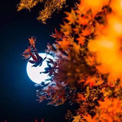 Ľubica Čekovská : 02.A Sonnet Of The Moon