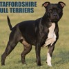 Just Staffordshire Bull Terriers 2012 Calendar  download pdf