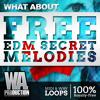 FREE EDM Secret Melodies [20 KSHMR Inspired MIDI & WAV Loops + Drum Fills]