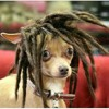 Reggae Dan Moi Beats By Susana.mp3