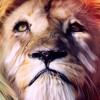 lions circle - Ashraf Flamce & Amr Jecob -دايره اسود