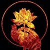 Kirtan Maha Mantra Hare Krishna - Madre Violeta