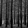 forest // tøp