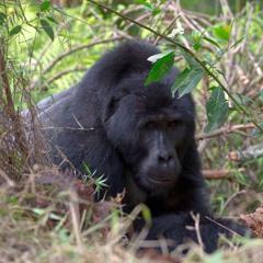 Nature Recordings - Africa