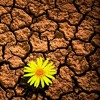 The Soil - Baninzi (Soul O'deep Remix)