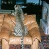 Relato Acústico - Leopardo